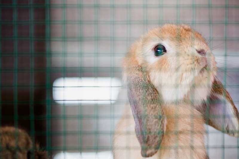 Top Tips for Choosing the Perfect Hutch for Your Rabbits