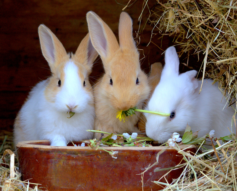 three cute rabbits eating fresh flowers and grass in their hutch
